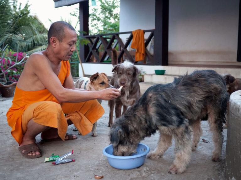 Mönch mit Hunden