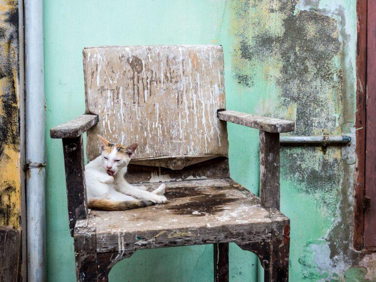 Katze auf altem Stuhl