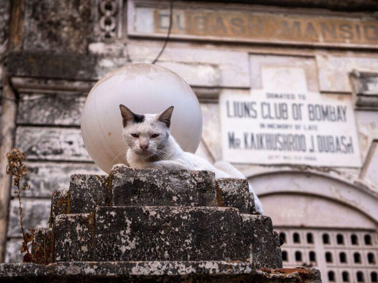 Katze in Mumbai
