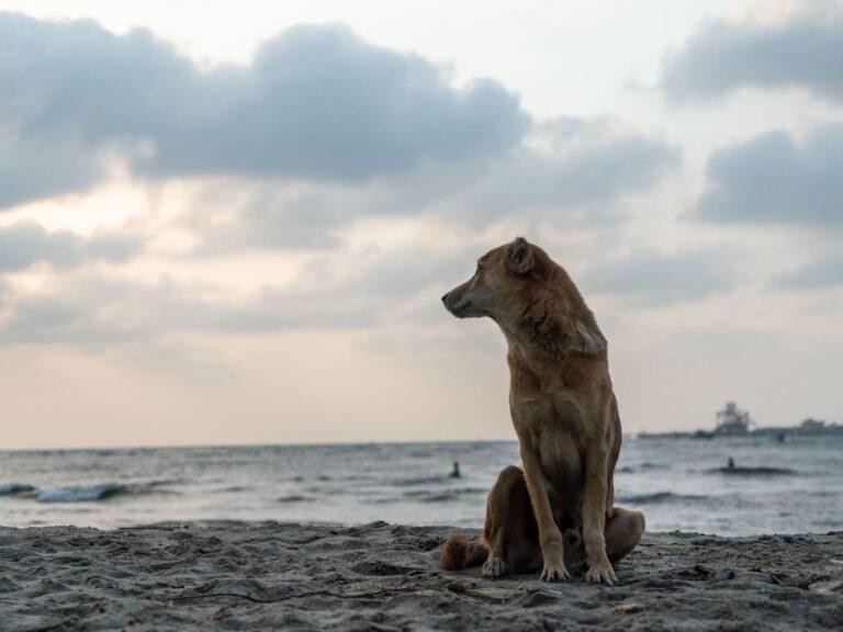 Hund schaut auf das Meer
