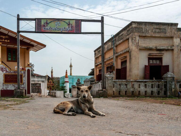 Straßenhund in Myanmar