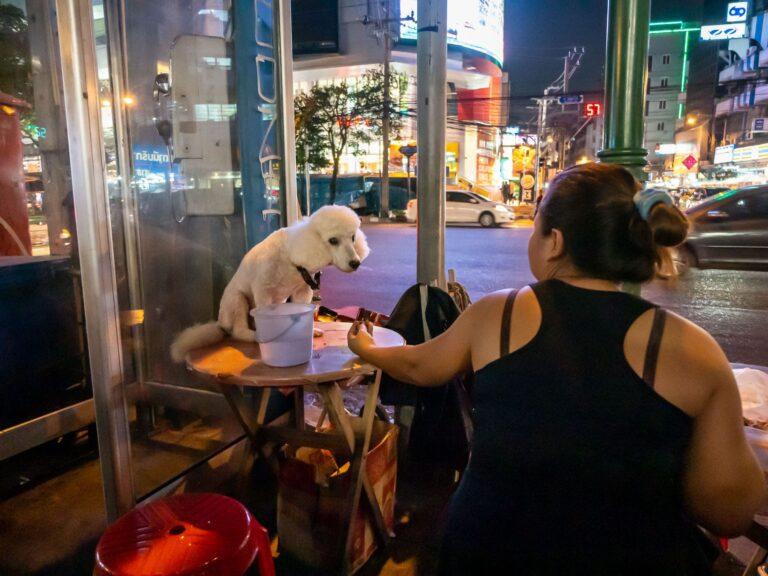 Hund auf einem Tisch